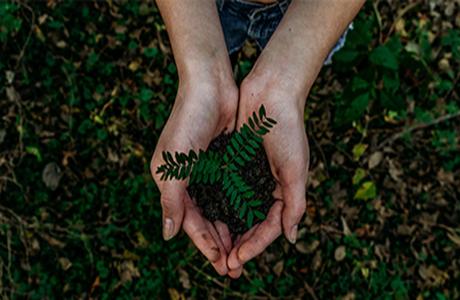 Handen houden plant - omgeving