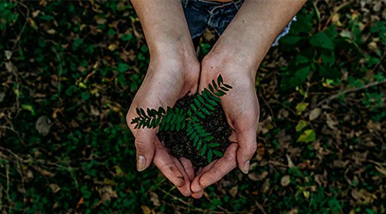 Hände halten Pflanze - Umwelt